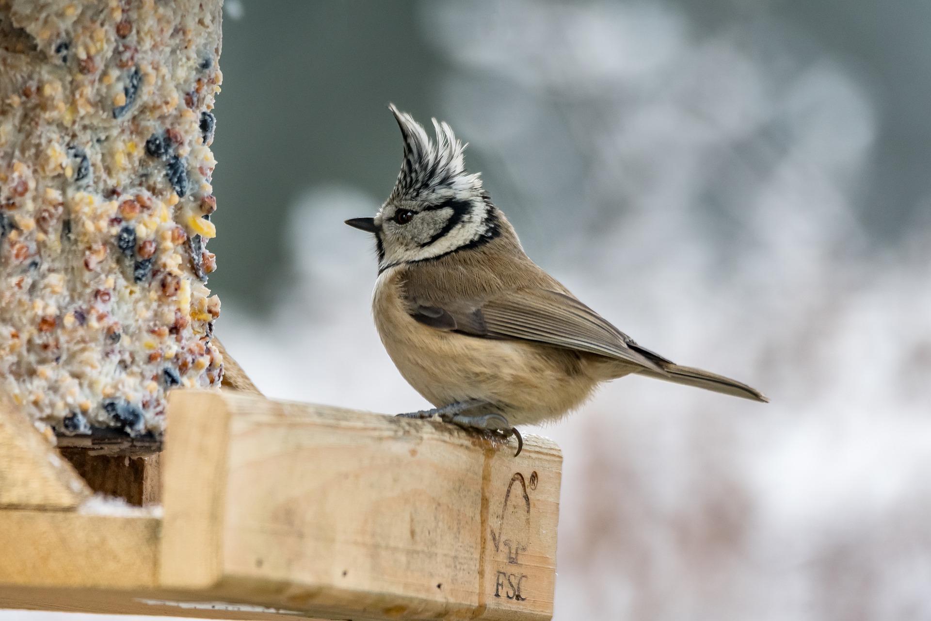 Vögel brauchen bei Kälte Futter und etwas zu trinken
